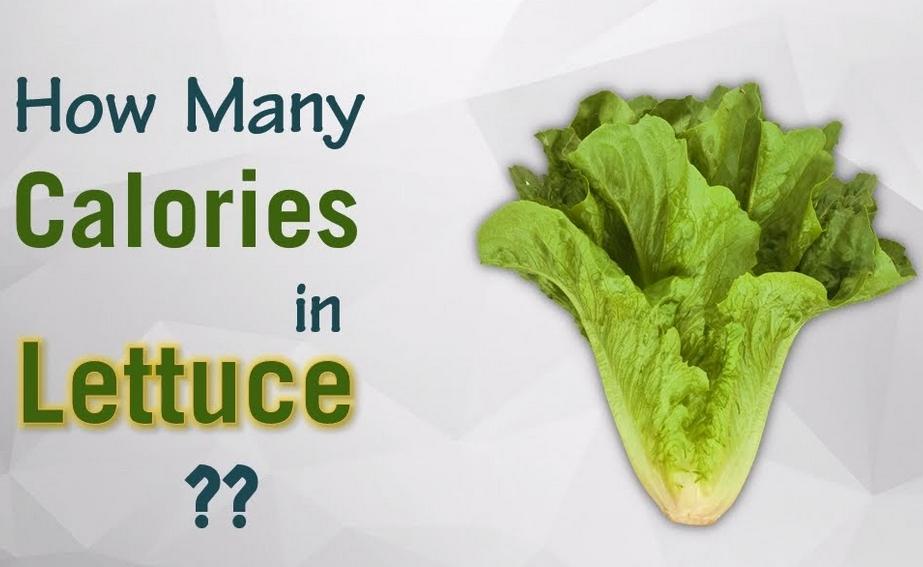 calories in lettuce