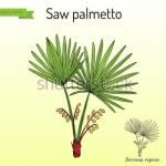 benefits of saw palmetto