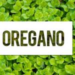 Oregano Herb Nutrition Facts