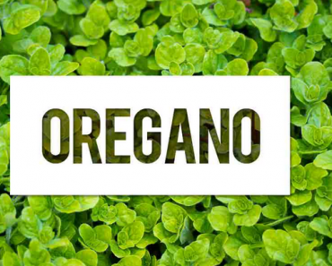Oregano Herb Nutrition Facts